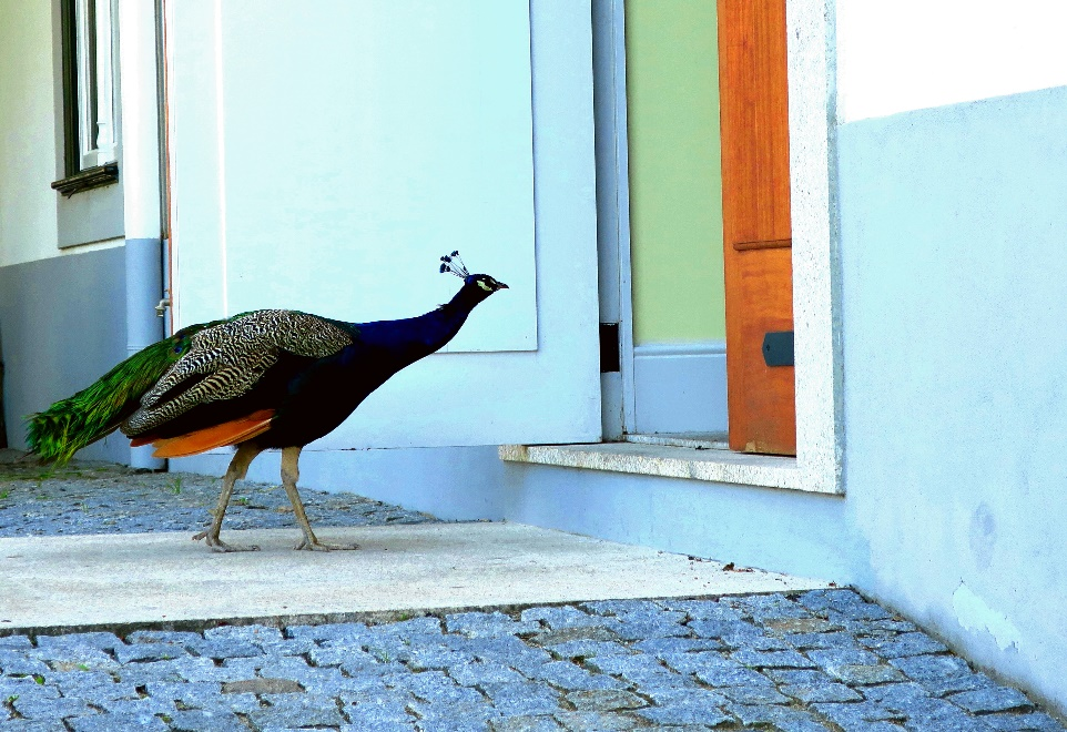 A bird standing in front of a building Description automatically generated