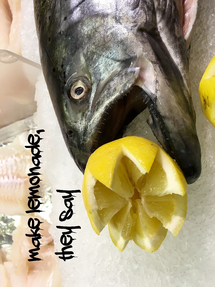 A close up of a fish Description automatically generated
