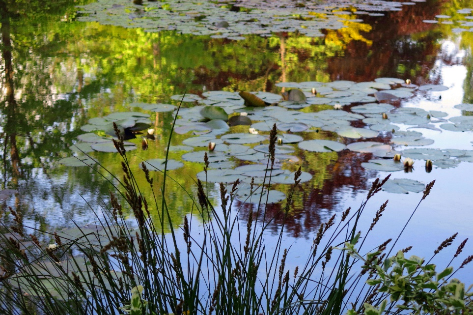 A close up of a pond Description automatically generated