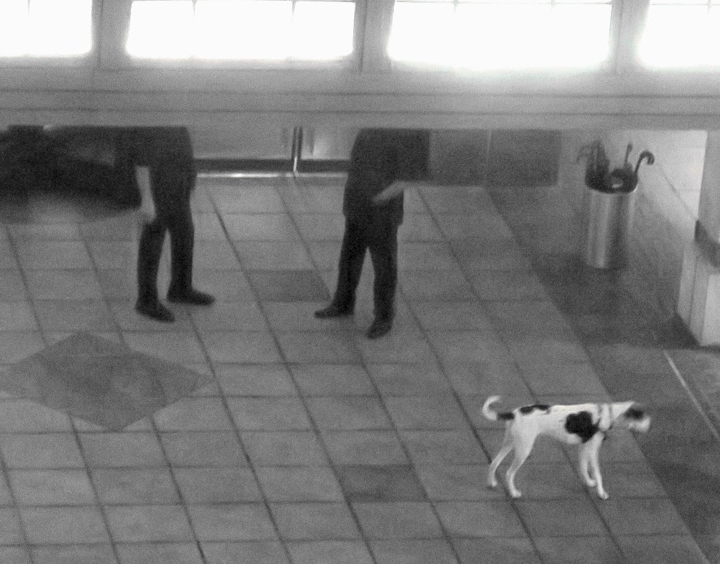 A dog walking on the floor Description automatically generated