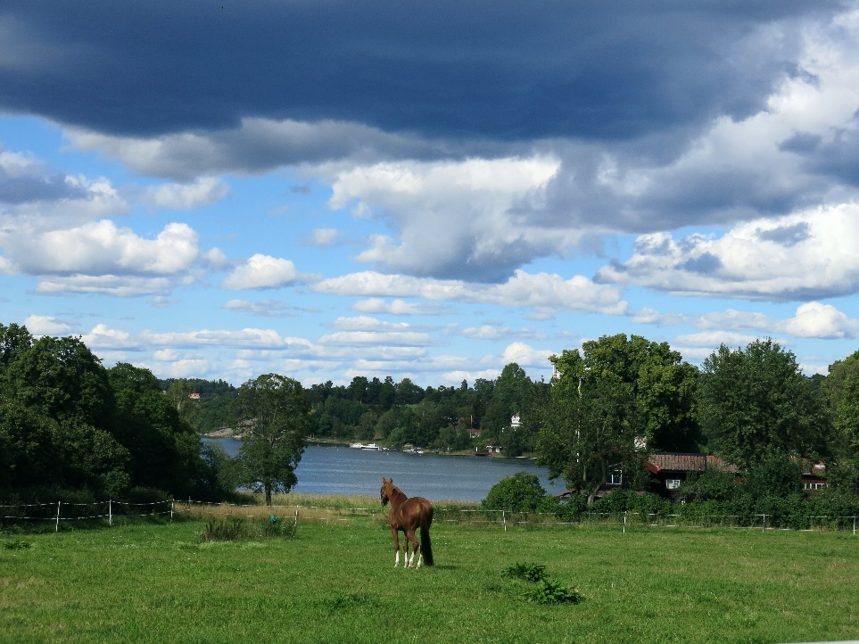 A horse grazing on a lush green field Description automatically generated