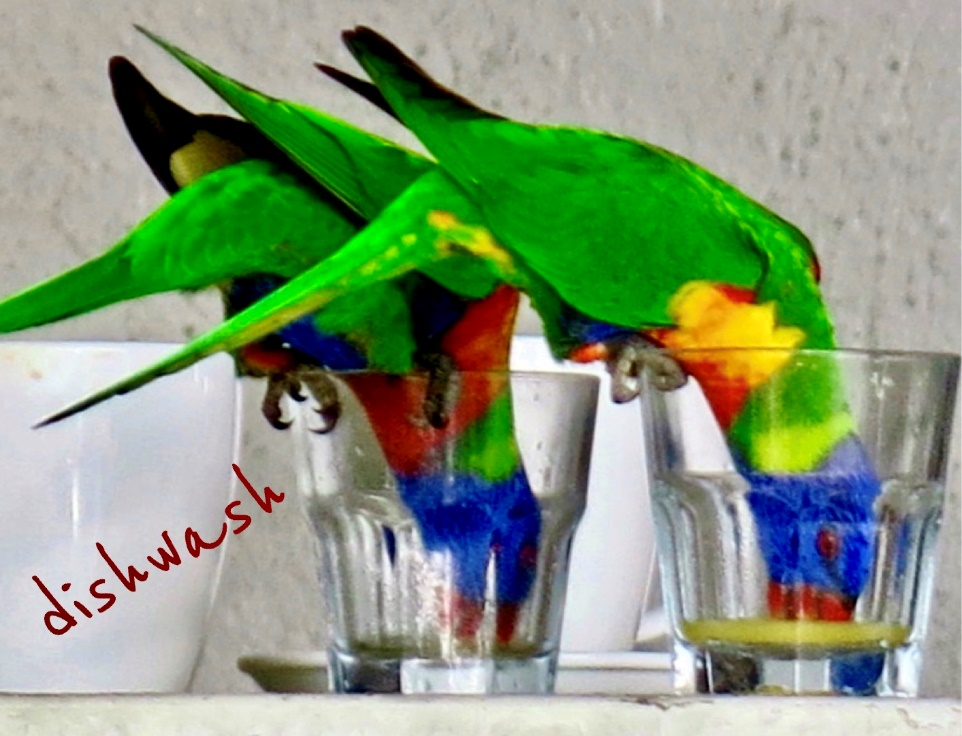 A parrot sitting on a table Description automatically generated