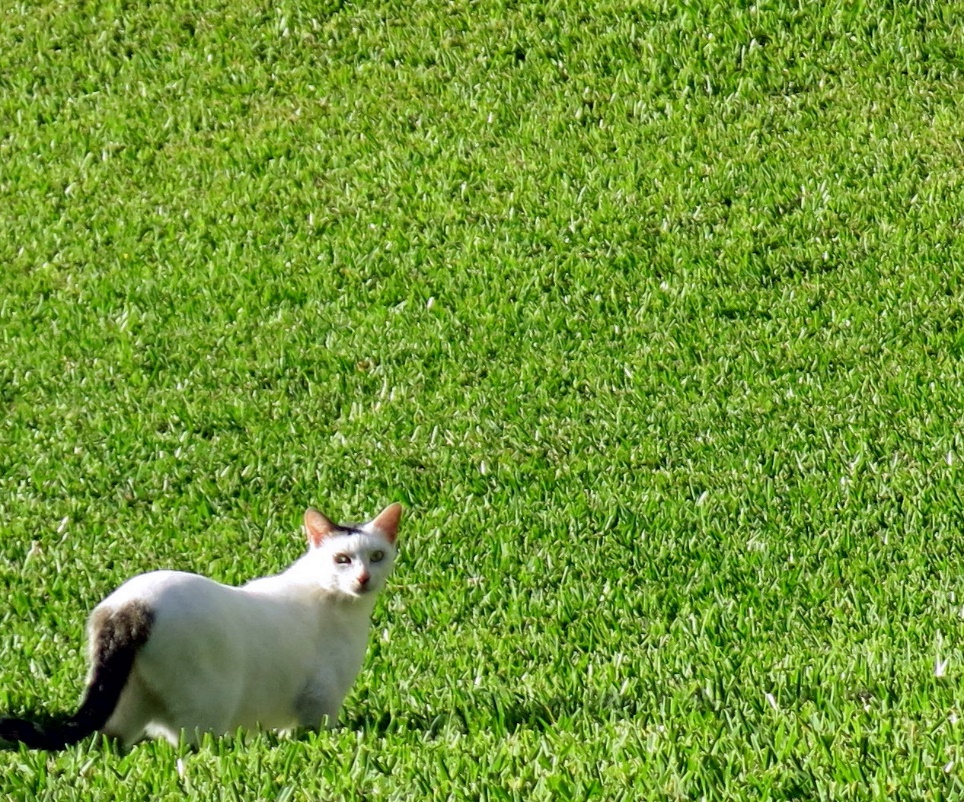 A small white dog standing in the grass Description automatically generated