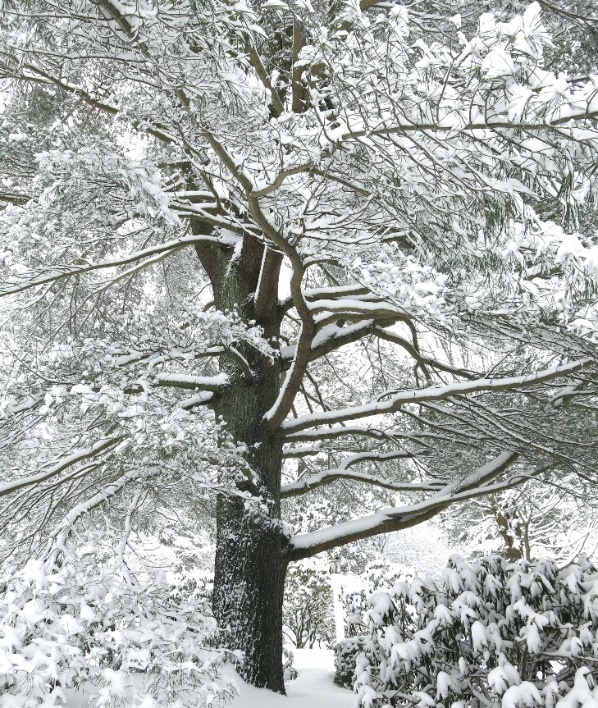 A tree covered in snow Description automatically generated